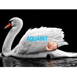 aquaint50 2